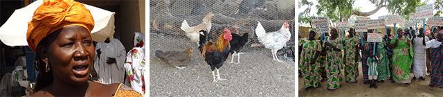 ident.africa - Frauen machen sich mit Hühnerfarm selbstständig